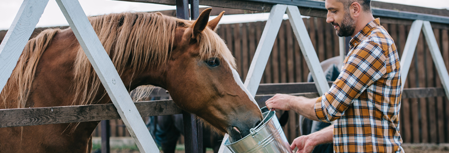Alimentation de son cheval